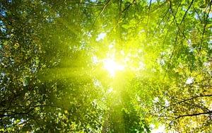 sunshine-forest-treetop